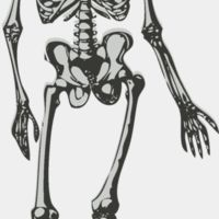 Science   medical skeleton Thumbnail